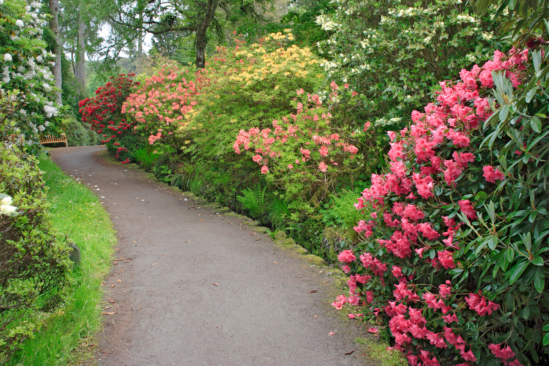 Beautiful garden with flowery bushes and walk path